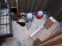 Weiterlesen: Alles für die Hühner...