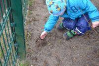 Weiterlesen: Wir säen Sonnenblumenkerne auf dem Spielplatz